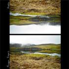 Maggie Rogers - Alaska (CDS)