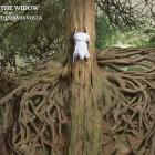 The Mars Volta - The Widow (CDS)