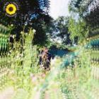 Sunflower (CDS)